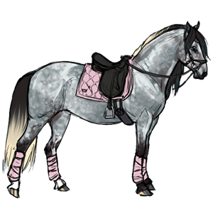 Riding Horse Purebred Spanish Horse Dapple Grey