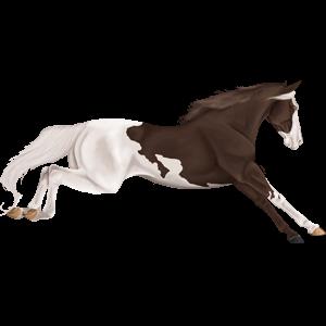 Riding Horse Holsteiner Liver chestnut