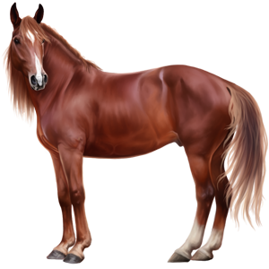 Jezdecký pegas Tennesseeský mimochodník Černý ryzák