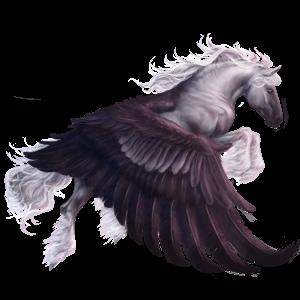Draft Pegasus Shire Black