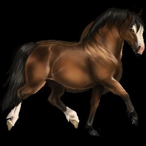 Pony Quarter Pony Flaxen Chestnut