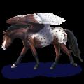 Riding pegasus Mustang Liver chestnut