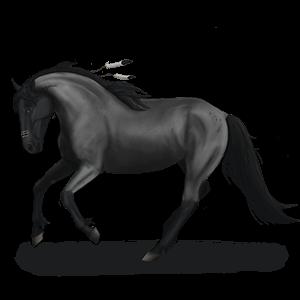 Riding Horse Paint Horse Palomino Tovero