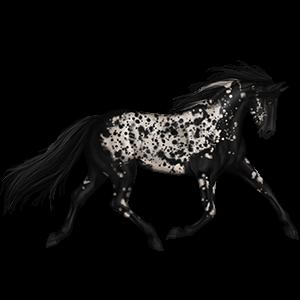 Riding Horse Appaloosa Palomino Spotted Blanket