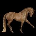 Riding Horse Selle Français Dapple Grey