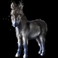 Donkey Donkey Black