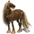 Draft horse Percheron Dapple Gray
