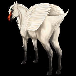 Pegasus pony Newfoundland Pony Cremello