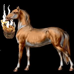 Jahalni konj Angleški polnokrvni Rdečkasto rjava