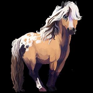 Pony Shetland Black Tobiano