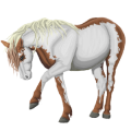 Riding Horse Barb Dark Bay
