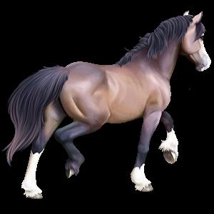 Pony Newfoundland Pony Cremello