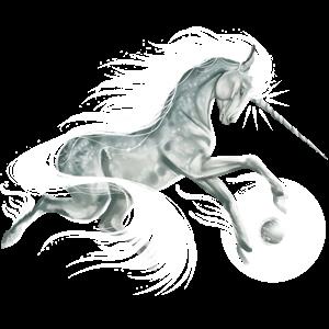 Unicorn pony Belgian Riding Pony Bay