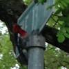 Small woodpecker