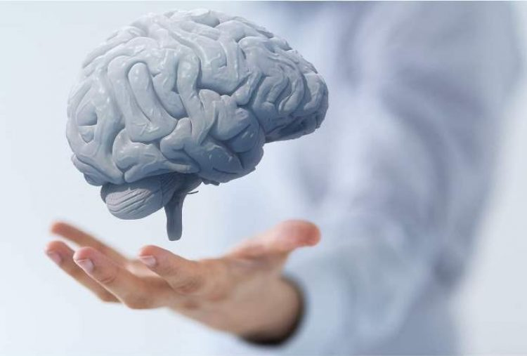 20 Must-Know Facts to Harness Neuroplasticity and Improve Brain Health