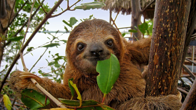 The Wisdom of the Sloth: Is Sleep a Lost Virtue?