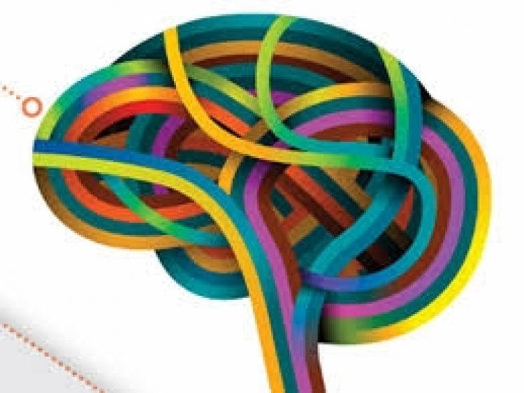 Top 15 Insights About Neuroplasticity, Cognition, Emotions and Learning. Surprised?