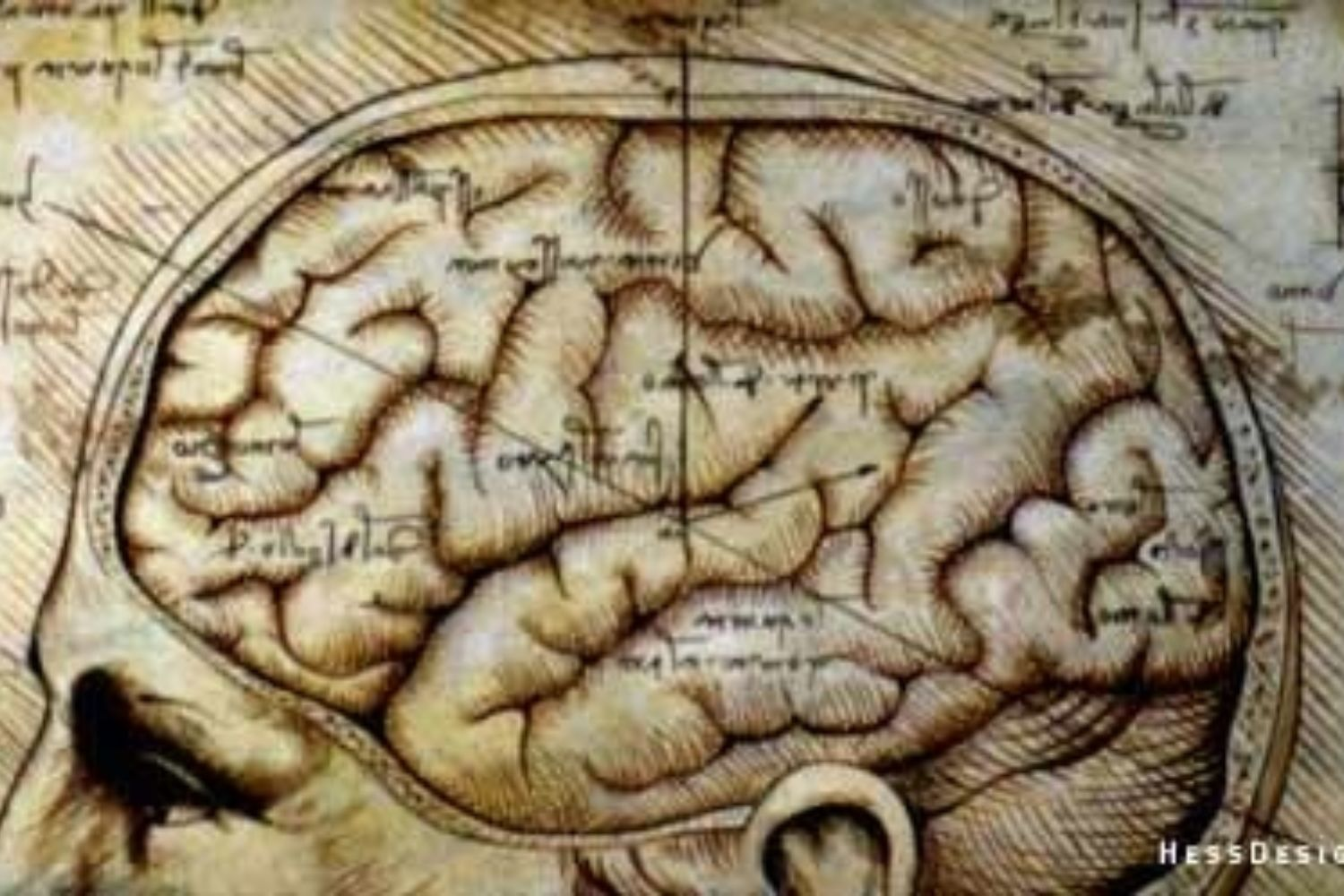 The Myth of the Myth of The Right Brain Difference: And Why It Matters