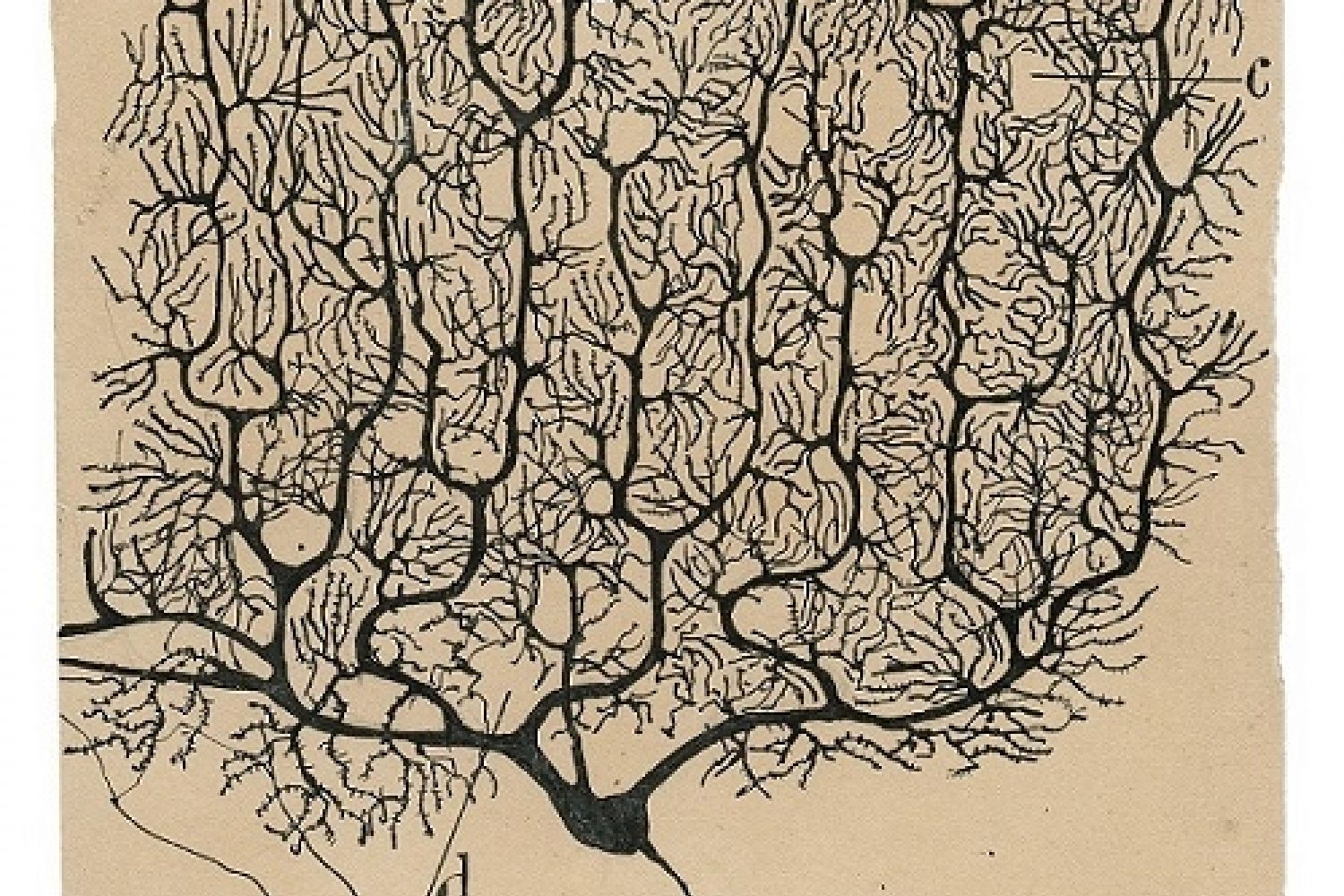 Neuroplasticity As Seen by Neuroscience Pioneer Santiago Ramón Y Cajal 100 Years Ago