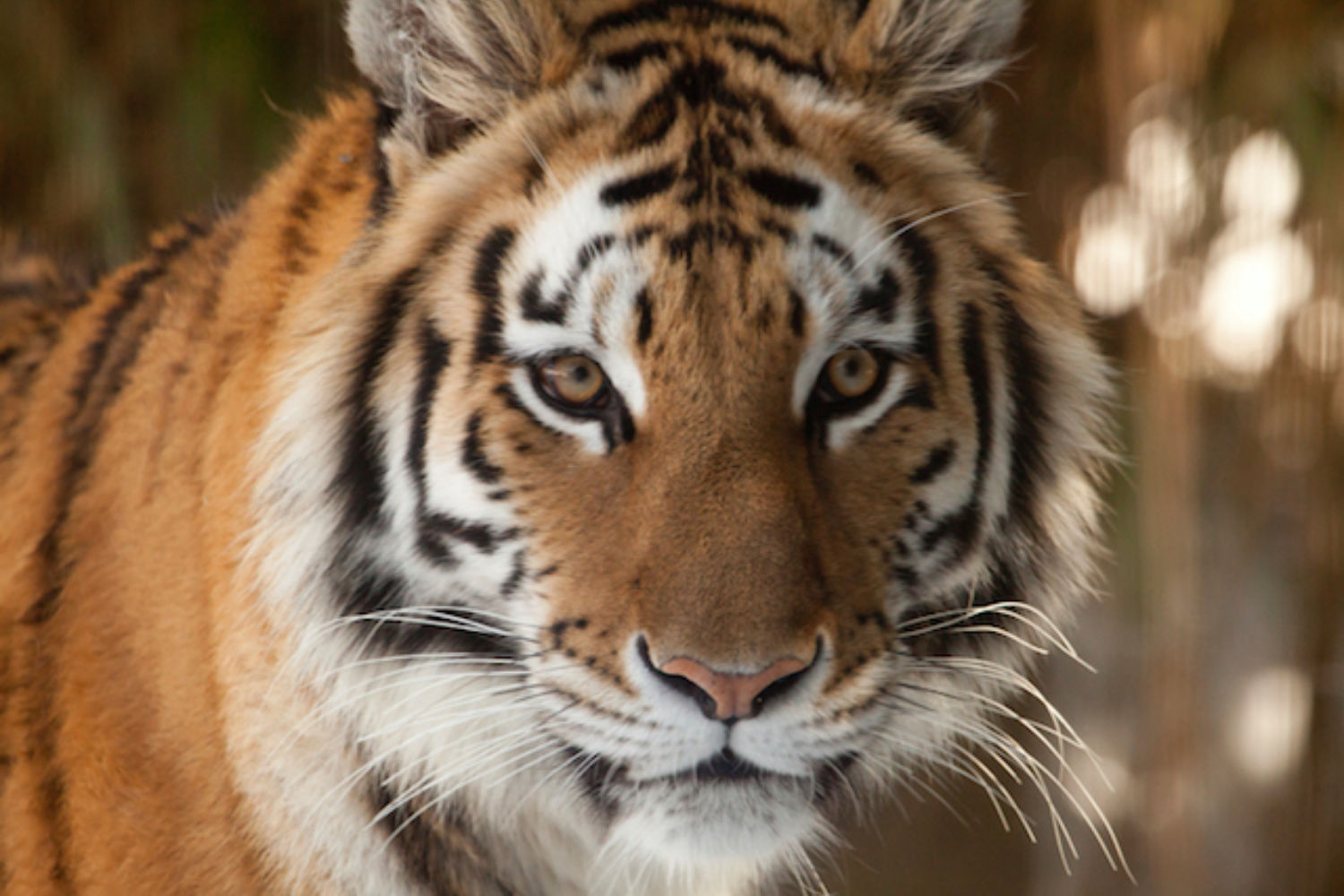 Leading Creative Teams Can Be Like Herding Tigers. Todd Henry Helps Us Do It Well