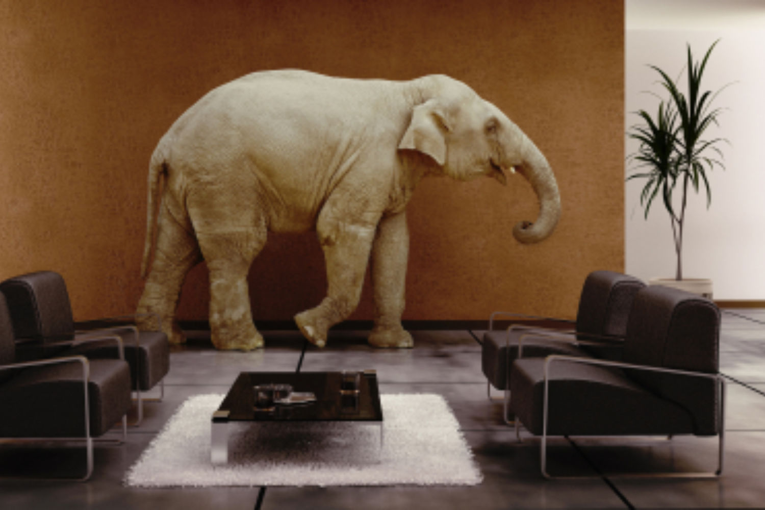 Elephants in the Room of Creativity and Innovation Talk