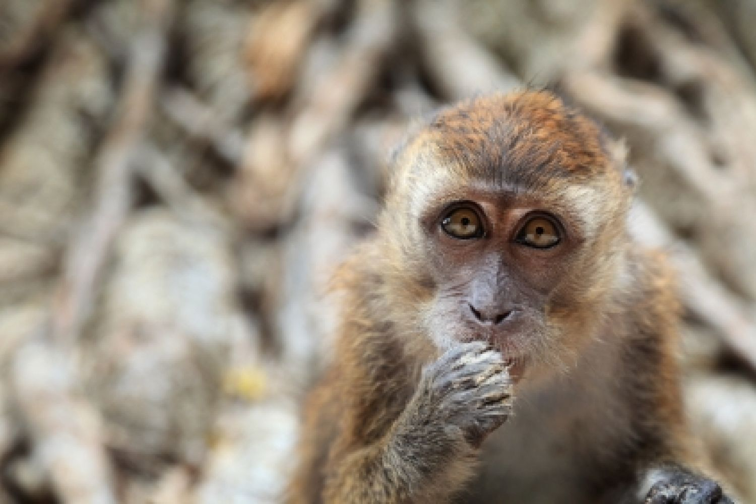 What Monkeys Teach Us about the Assumptions We Make