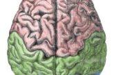 Image for The Neuroscience of Creativity