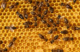 Image for The Wisdom of the Hive: Is the Web a Threat to Creativity and Cultural Values?