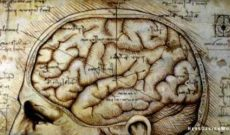 Image for How Neuroscience Is Being Used to Spread Quackery in Business and Education