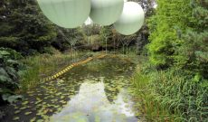 Image for Imagination takes flight at Tatton Park Biennial