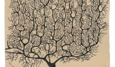 Image for Neuroplasticity As Seen by Neuroscience Pioneer Santiago Ramón Y Cajal 100 Years Ago