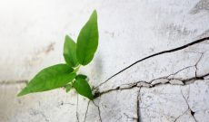 Image for Post-Traumatic Growth: Finding Meaning and Creativity in Adversity