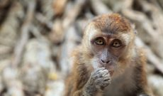 Image for What Monkeys Teach Us about the Assumptions We Make