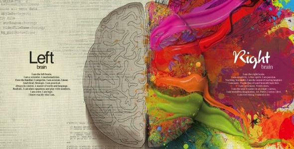 The left and right brain aren't created equal. Image credit: Bernard Goldbach, Creative Commons