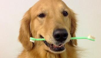 Doggy Dental Tips