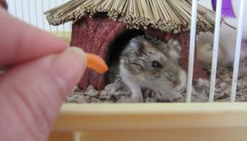 Healthy Hamsters
