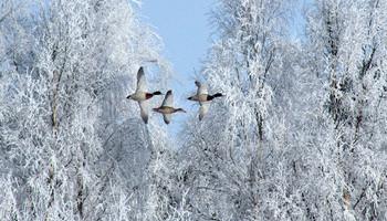 Snowbird Prep