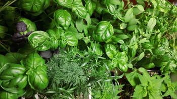 Grow Those Herbs