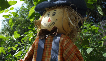 Sensational Scarecrows