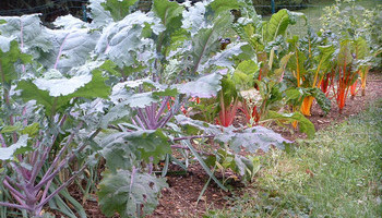 Extending Your Fall Vegetable Crop
