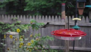 Hello, Birdie