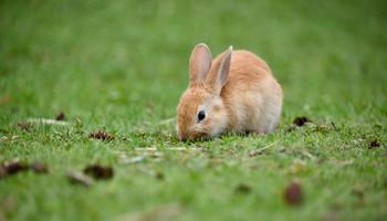 Rabbit Repellents