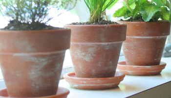 Restock Your Potting Shed