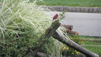 Backyard Bird-watching