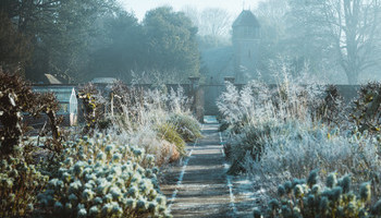 New Year's Gardening Resolutions