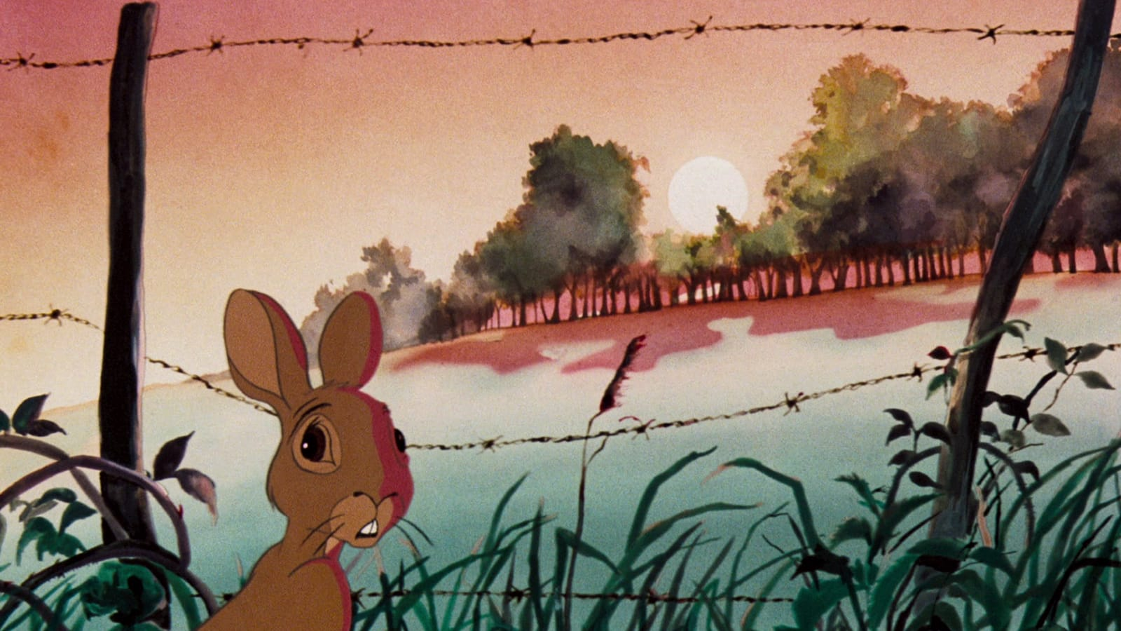 Watership Down 1978 The Criterion Collection