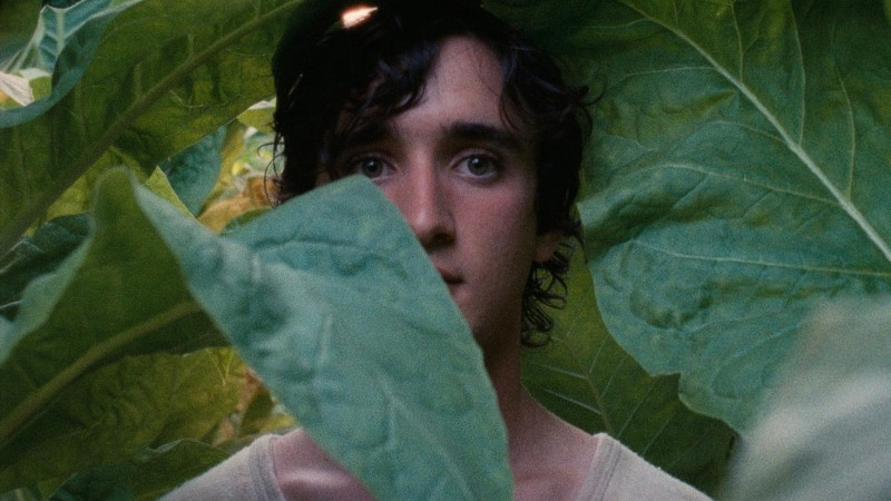 Alice Rohrwacher's Happy as Lazzaro
