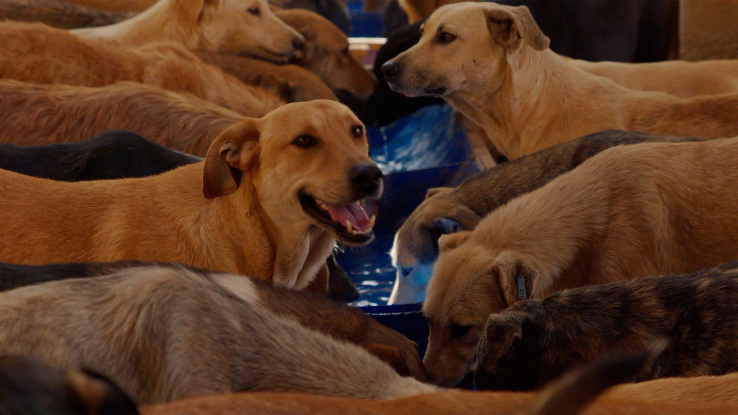 Dog Days: A Conversation with Halima Ouardiri