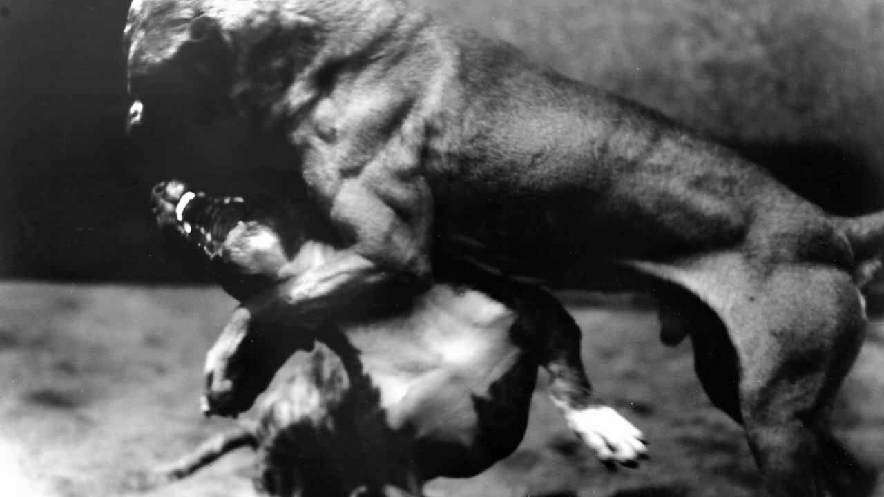 Amores perros: The Dogs That Heralded the Millennium