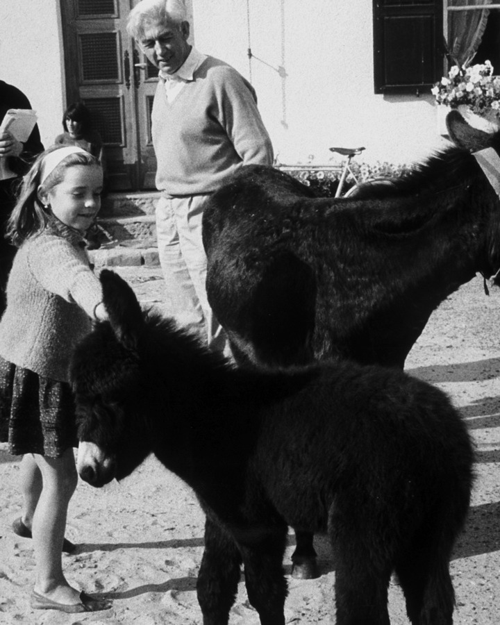 Bresson_baby_donkey_large
